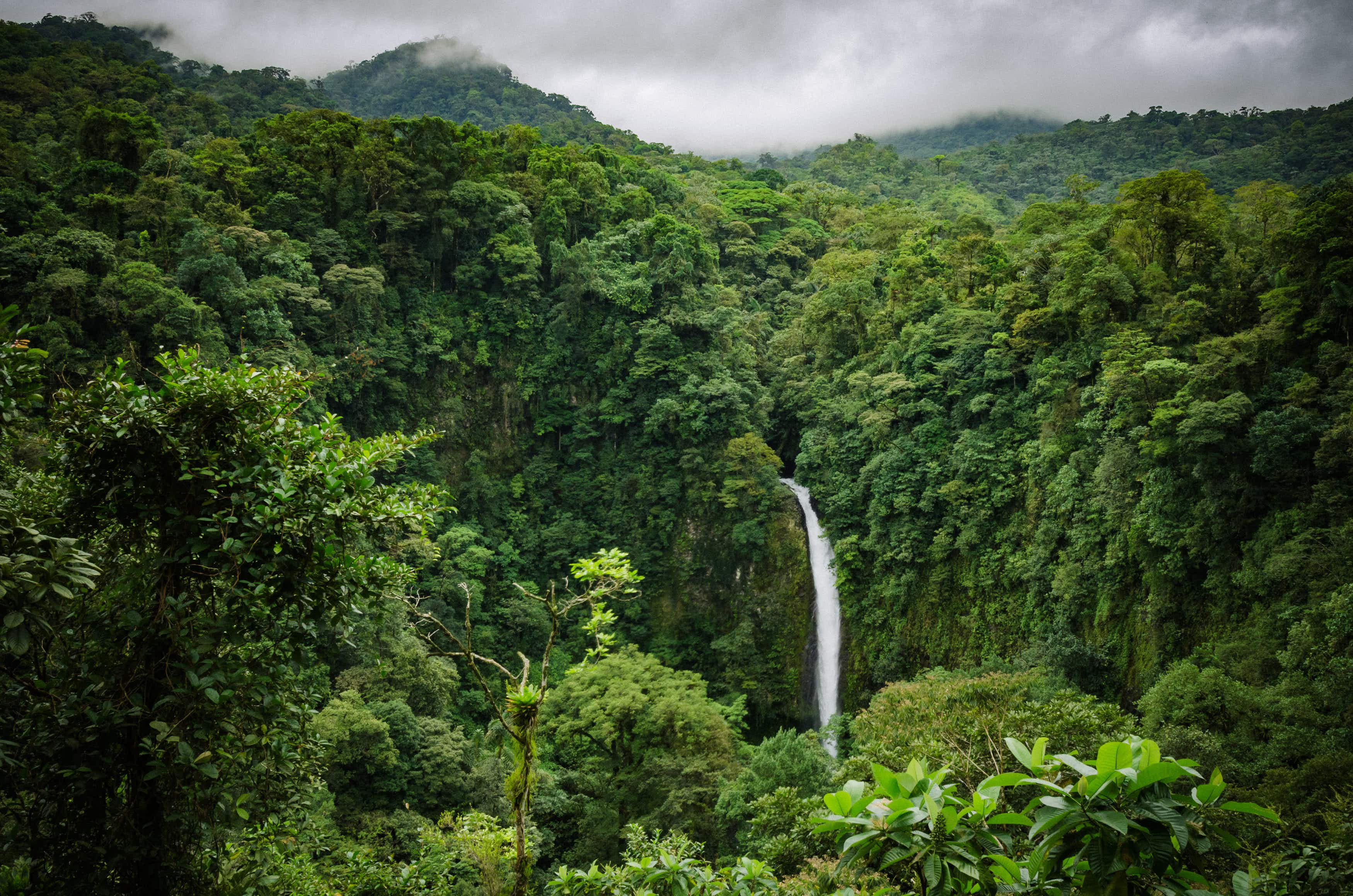 Costa Rica recognized by the UN for its efforts to combat climate change
