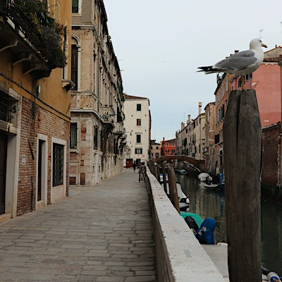 The canals of Venice look very different without tourists