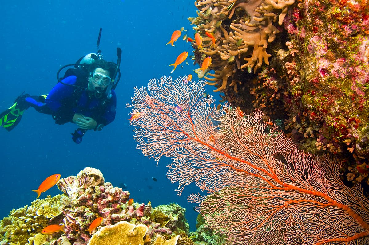 Dying coral could be revived by the sounds of healthy coral - Lonely Planet