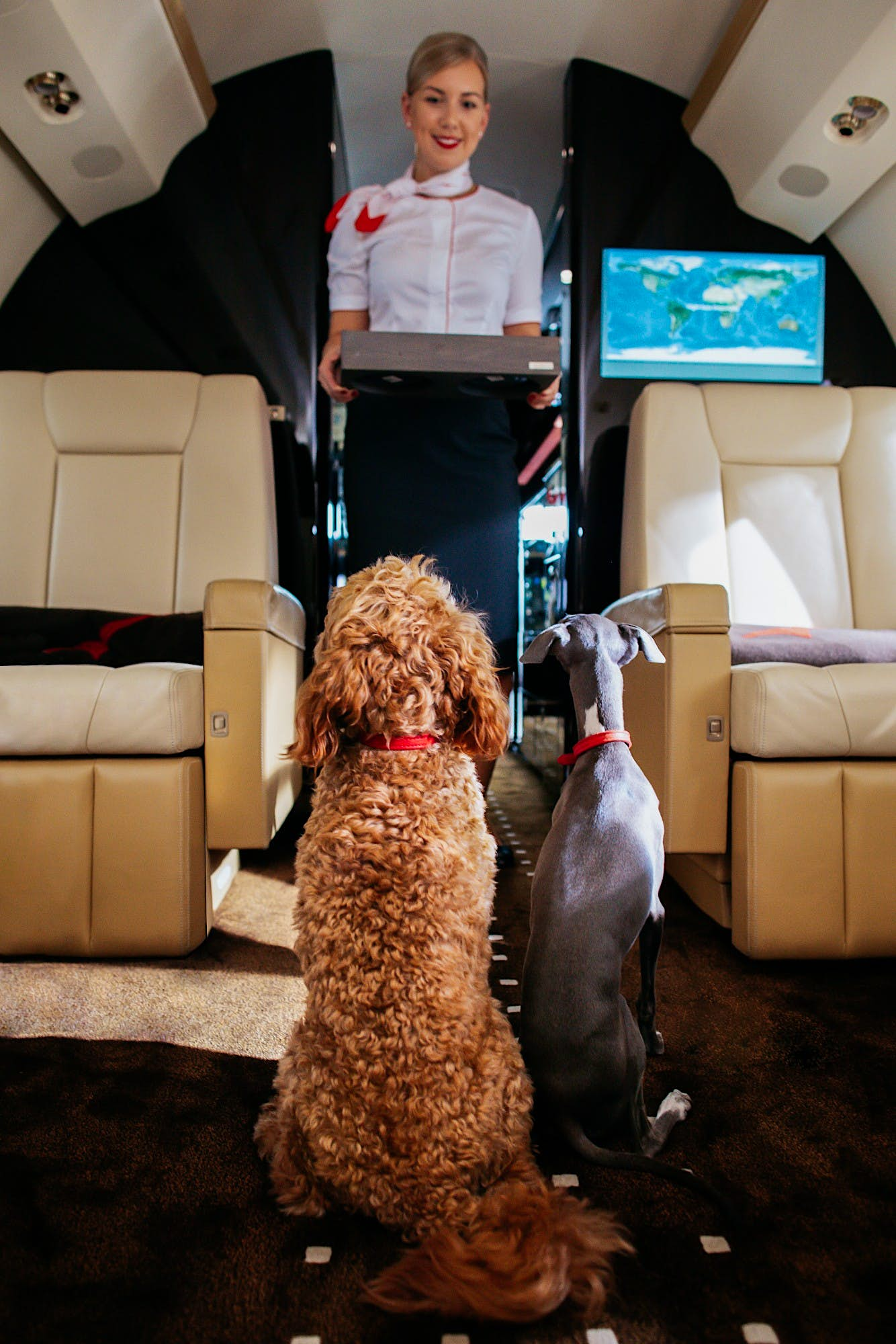 Pets will be served their own in-flight menu with this private jet company