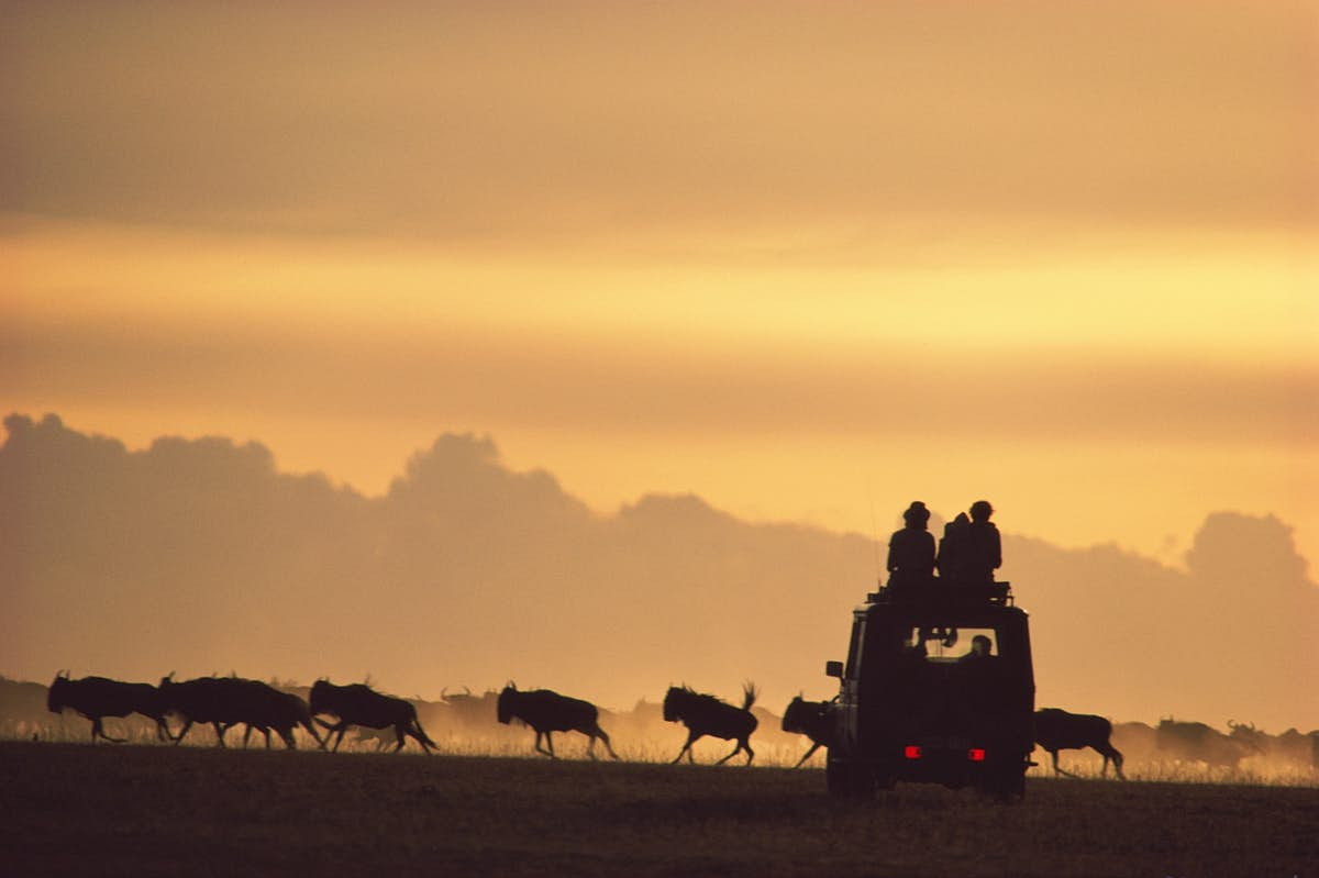 Top tips to make your African safari more affordable - Lonely Planet
