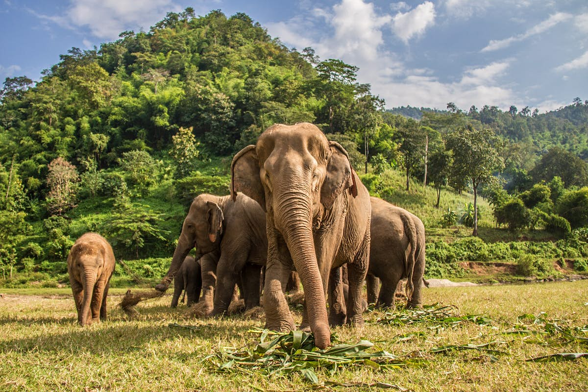 How to interact ethically with elephants in Thailand ...