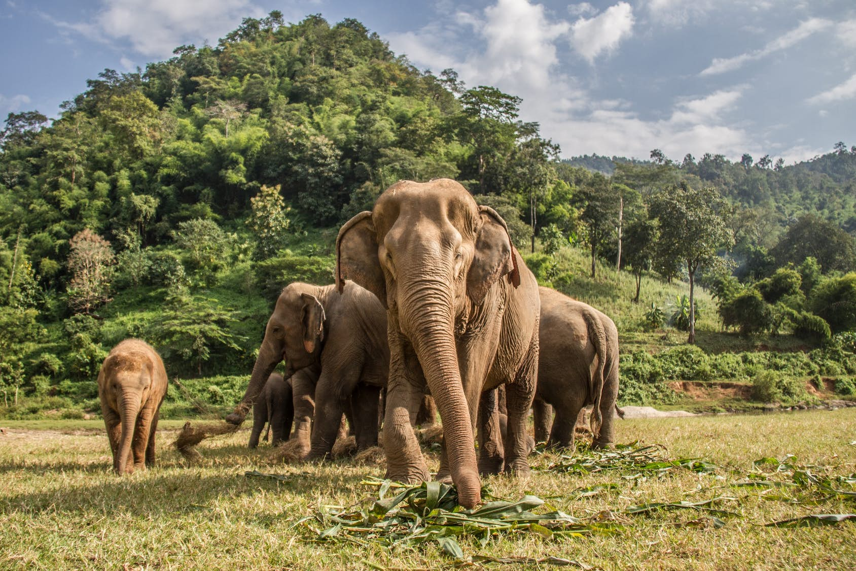 How to interact ethically with elephants in Thailand