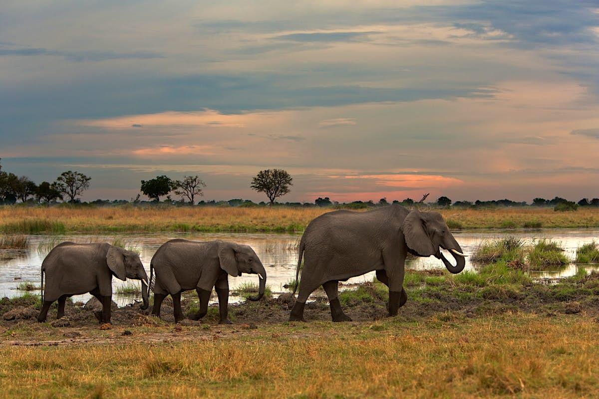 The explorer Levison Wood will follow elephant migration ...