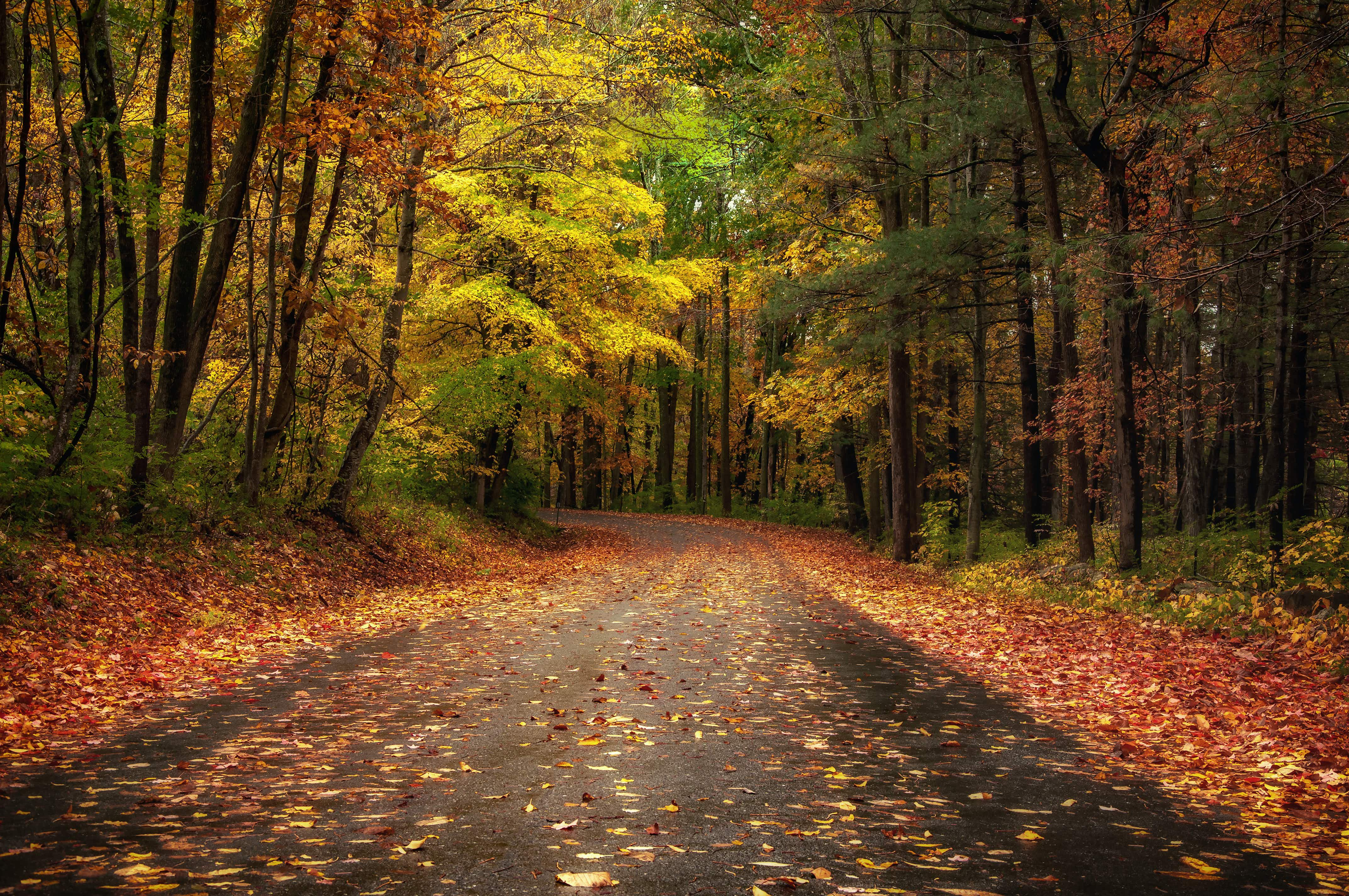 New York Fall Foliage 2020 Predictions.There S Still Time To Plan A Fall Foliage Trip In The Us