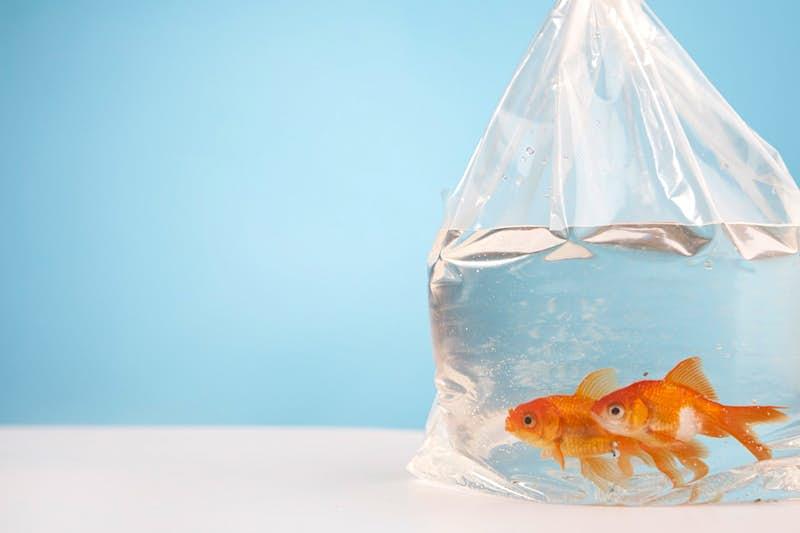 fish in bag.jpg