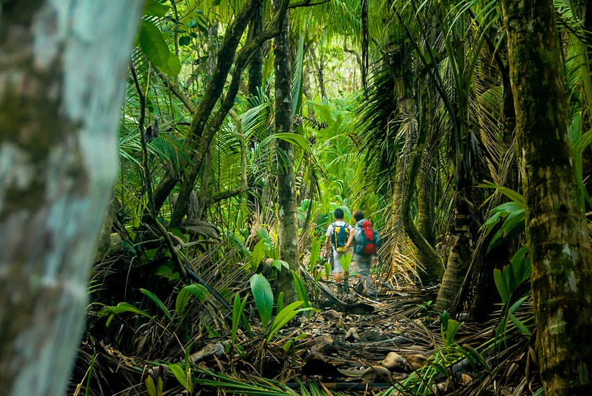 Two somewhat distant hikers are seen through a narrow gap in the thick rainforest within Parque Nacional Corcovado