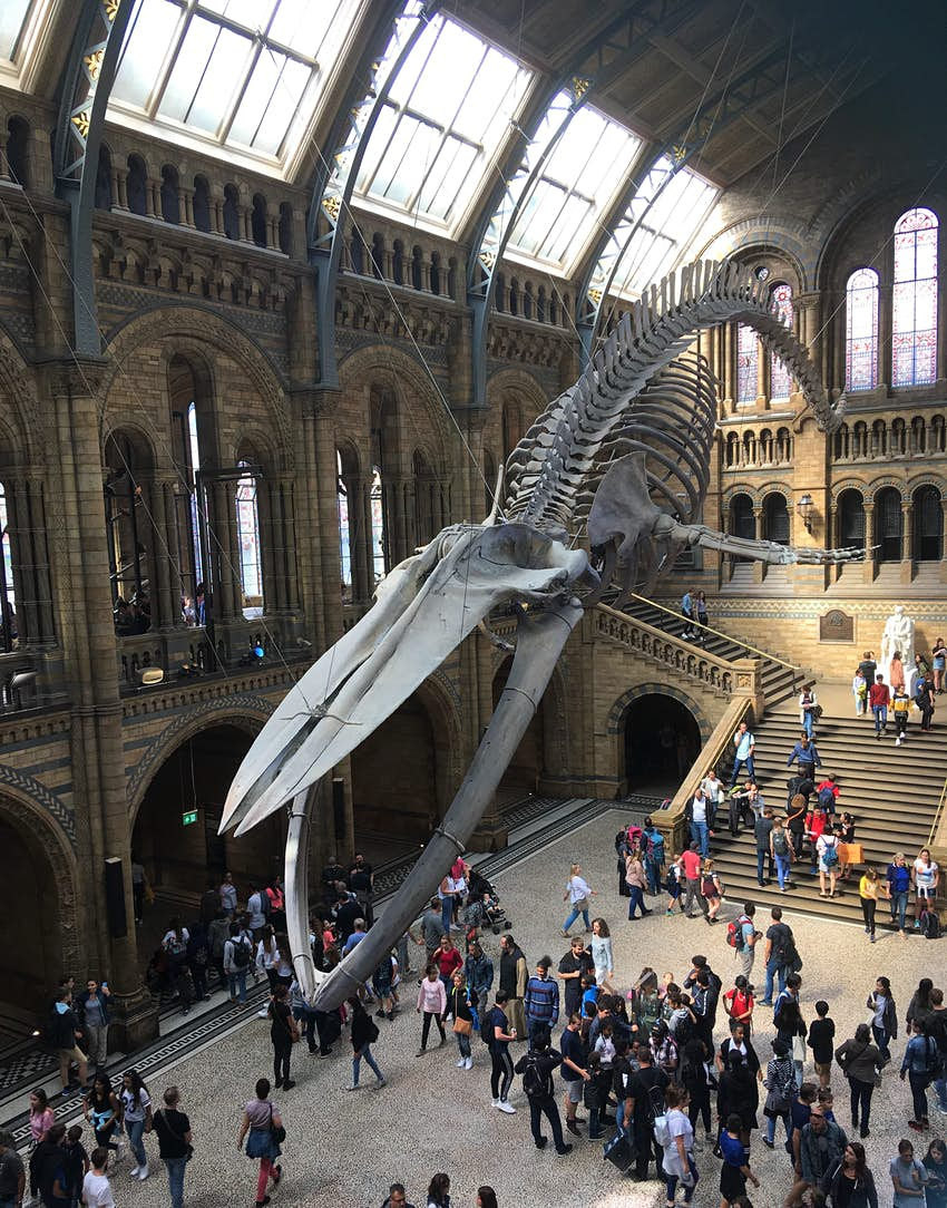 A very large hall with a blue whale skeleton suspended from the ceiling. People are moving around below.