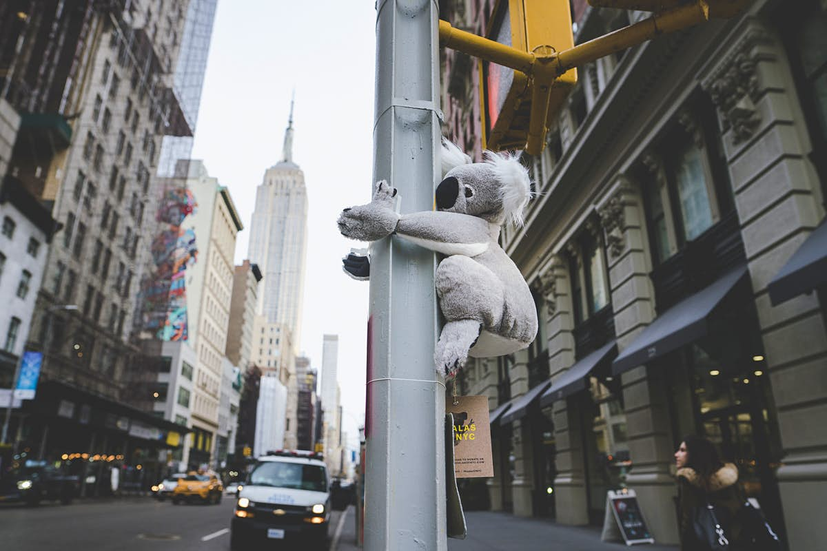 Stuffed koalas are hanging out all over NYC to support Australia's wildlife