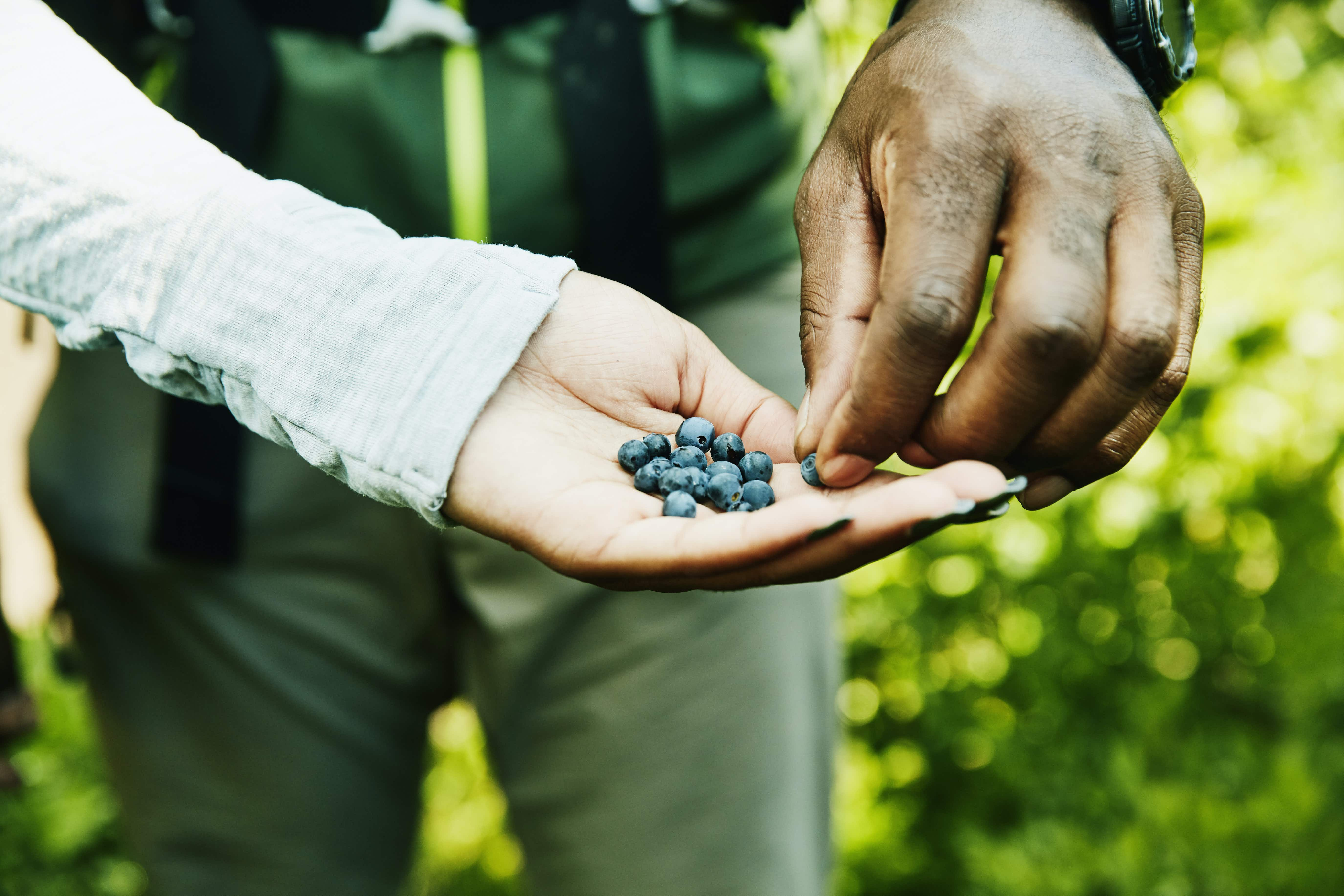 Top 6 places to go foraging in the US