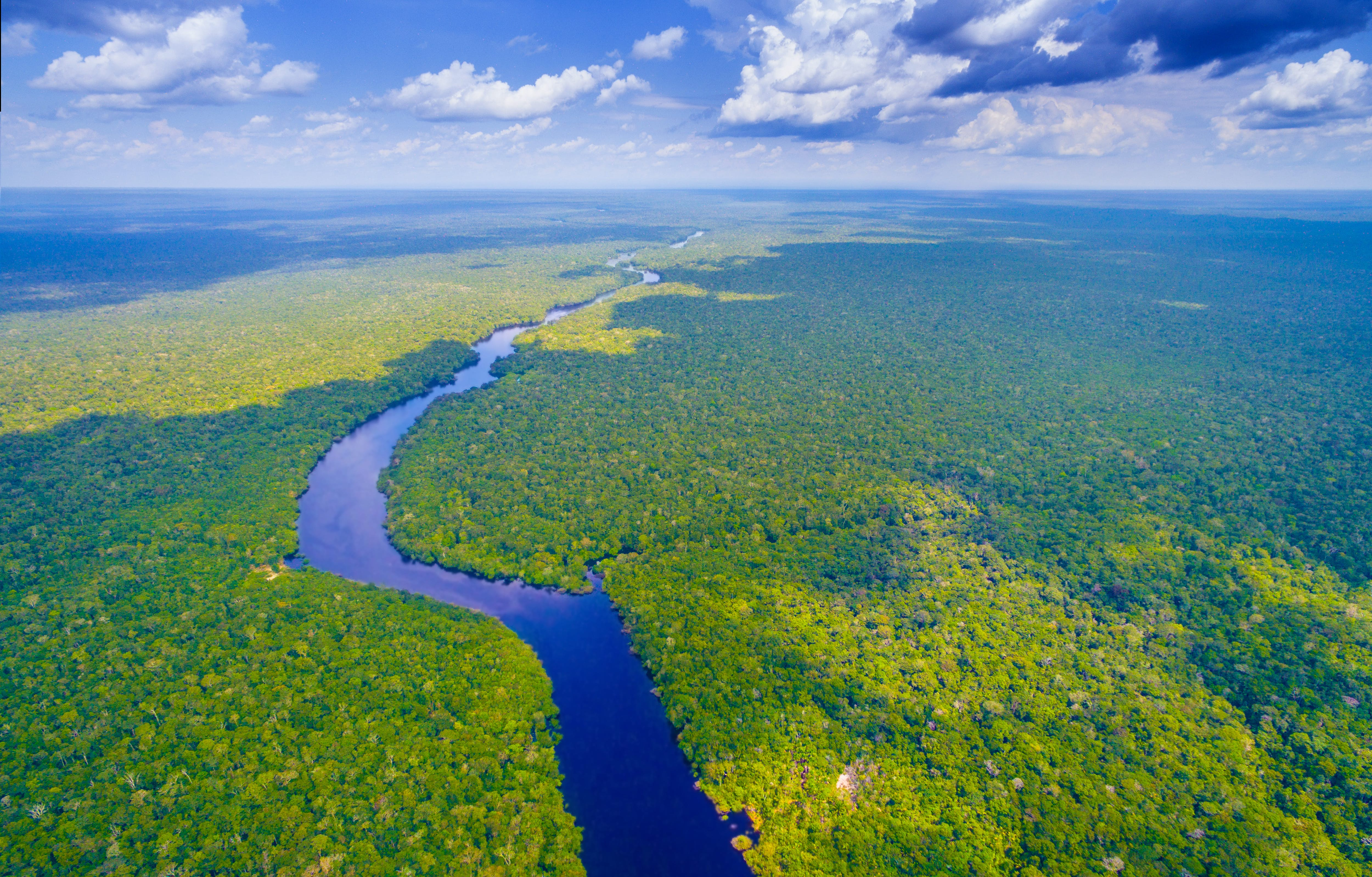 A picture of the amazon rainforest animals