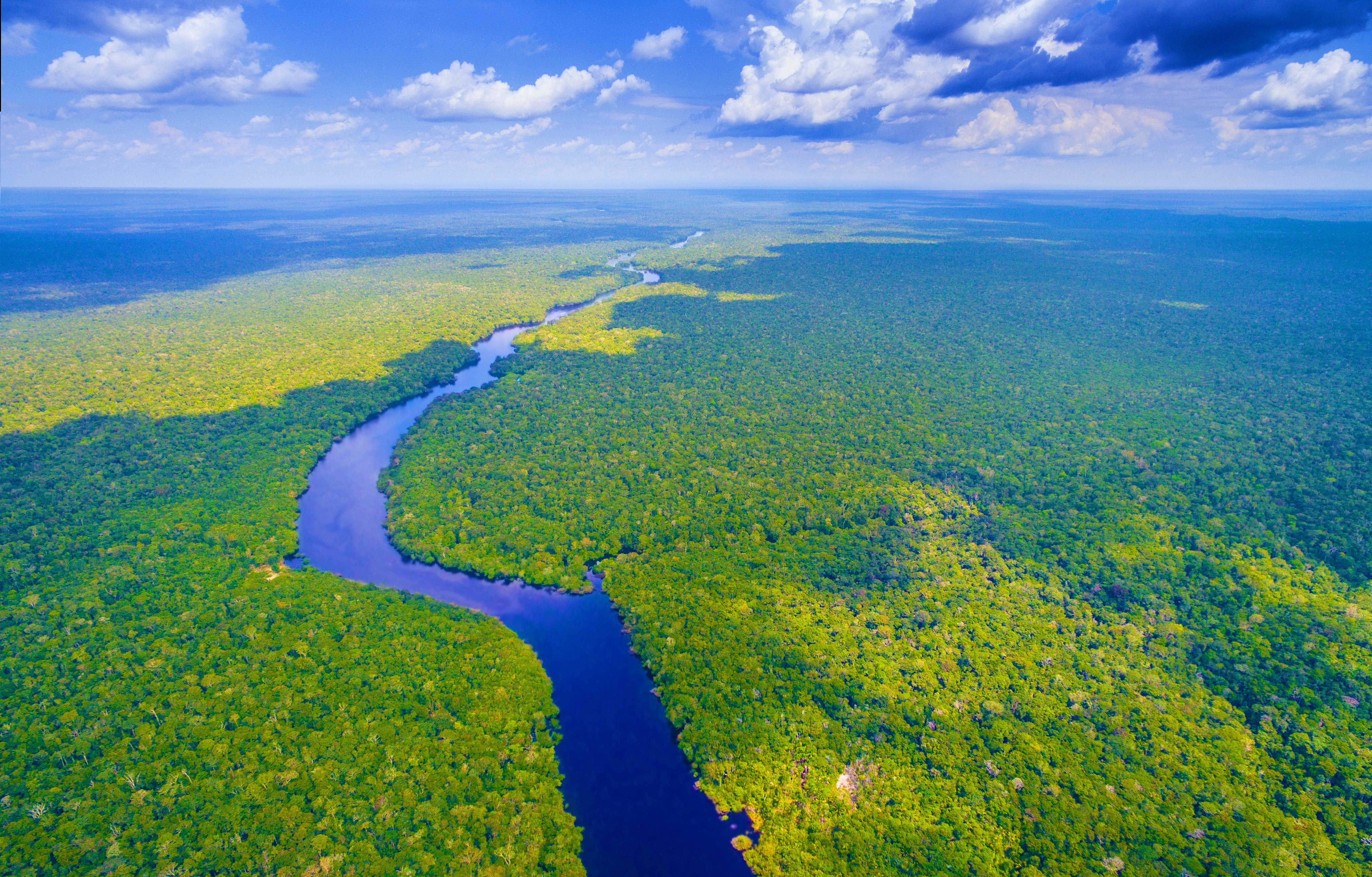The Amazon Rainforest Is Under Threat Here S How You Can Help