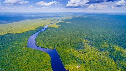 The Amazon rainforest is under threat: here's how you can help