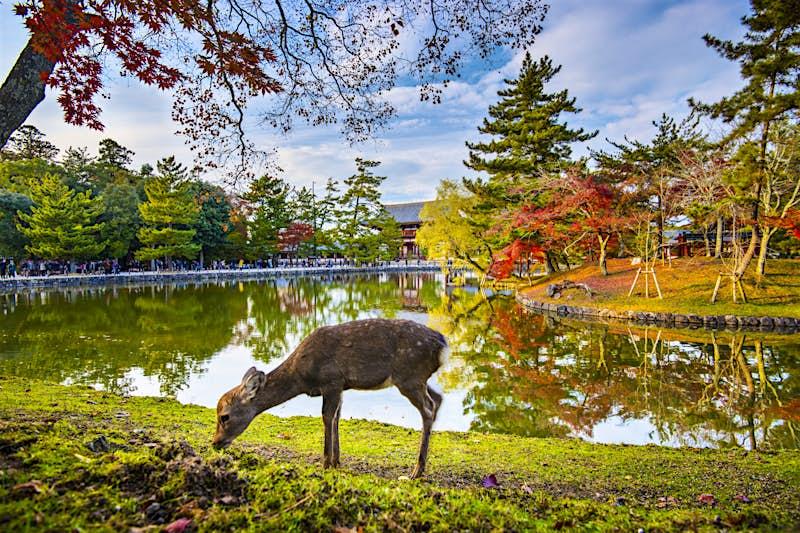 7 reasons to visit Nara, Japan's deer-loving ancient capital