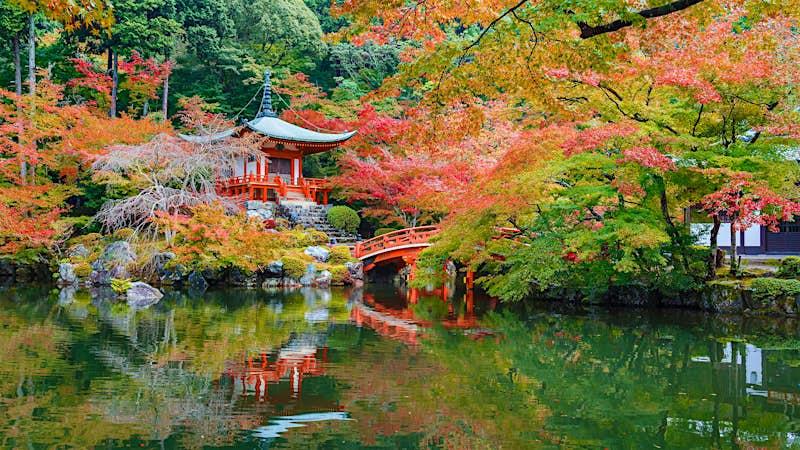 Một ngôi đền màu đỏ và cây cầu gỗ bắc qua một hồ nước được bao quanh bởi màu đỏ, màu vàng và màu xanh của cây và cây bụi thay đổi thành màu sắc mùa thu