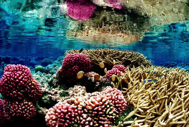 New 3D printing initiative to aid fight for coral preservation