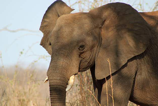 Irishman on safari has lucky escape after attack by bull elephant