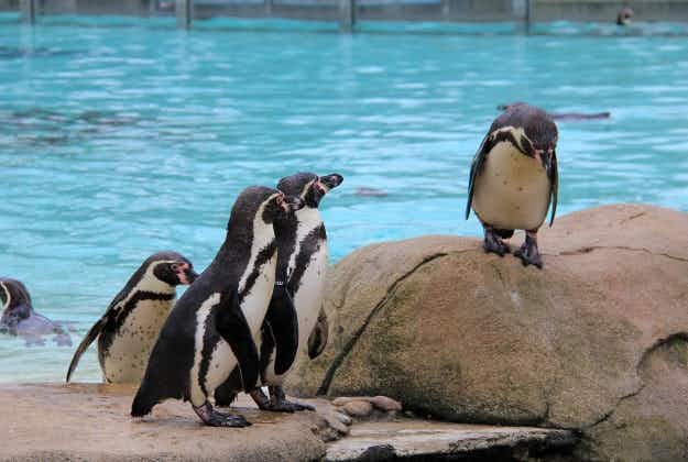 The world's largest penguin conservation facility to open at Detroit Zoo