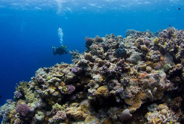Great Barrier Reef: experts call for new strategy to save top Aussie tourist attraction