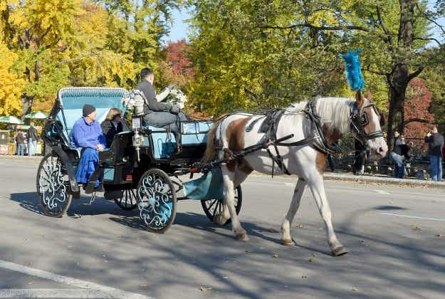Row over New York's  horse-drawn carriages may soon be resolved