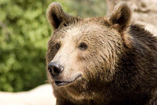 Bear stows away in truck headed to Fresno