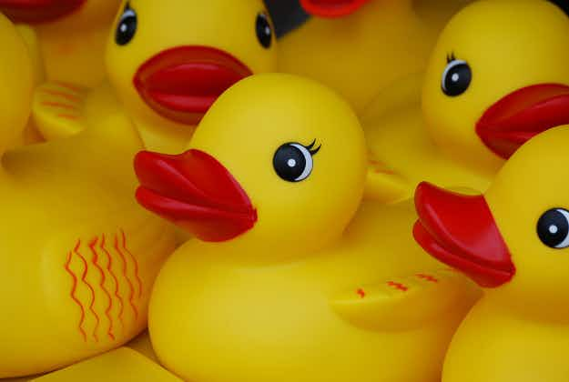 Giant rubber duck to be recycled into rocking chairs in Korea