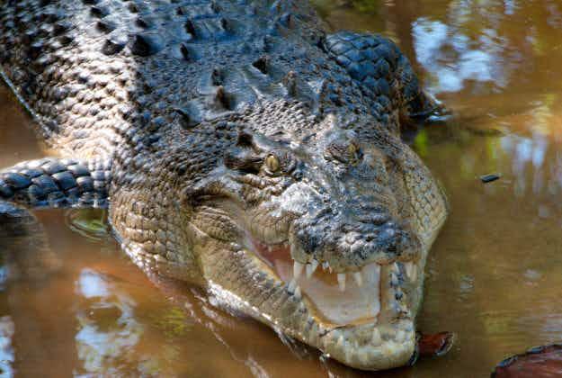 Crocosaurus complex for Sydney Park?