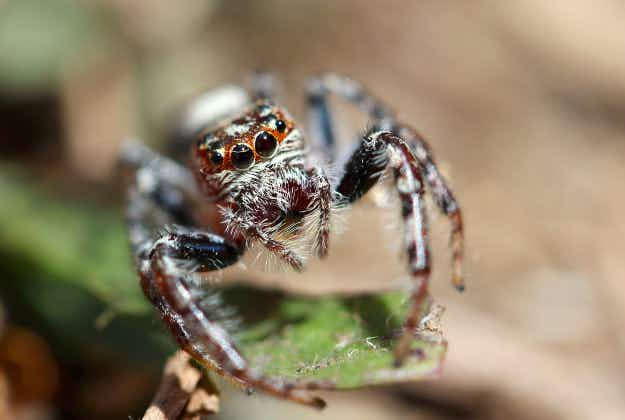 Sydney's heatwave creates 'perfect storm' for a spider boom