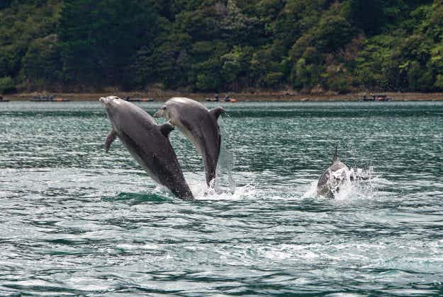 Scientists uncover the secret life of dolphins in the waters of New Zealand