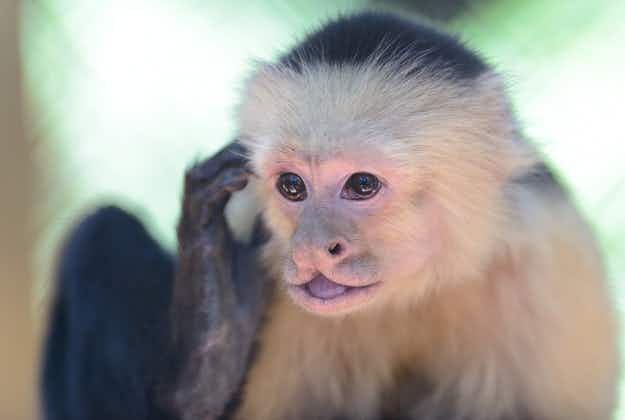 Like a scene from The Hangover! A passenger was caught smuggling a monkey on a Las Vegas-bound flight