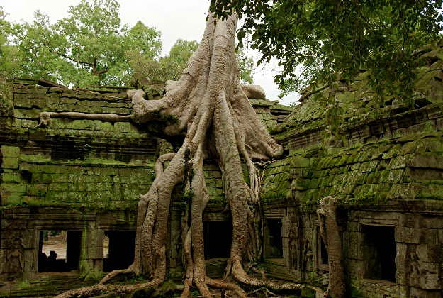 The forests around the temples of Angkor Wat in which the ancient urban centres were located
