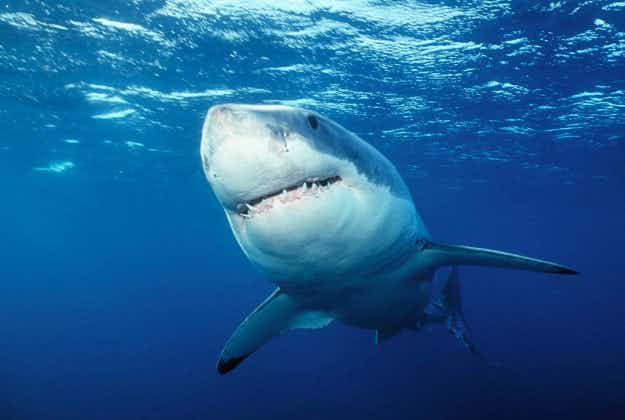 New South Wales urged to try shark spotters on coastline