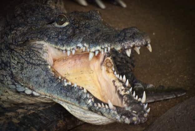 Call for crocodile safaris in Australia's Northern Territory sparks debate
