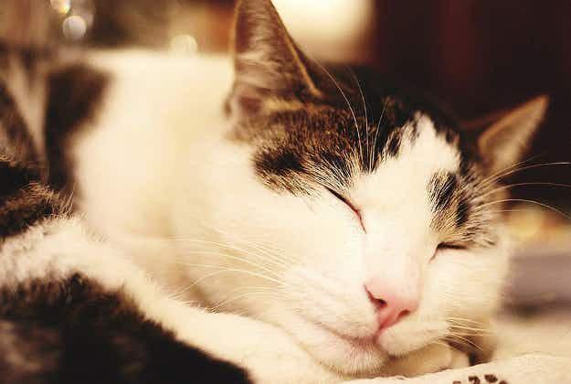 Brisbane gets its very first cat-friendly B&B