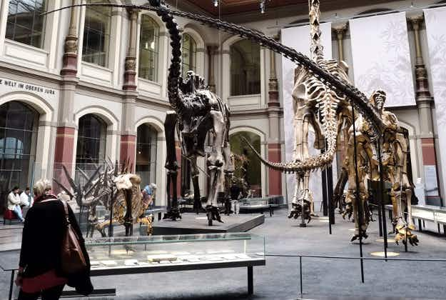 Berlin to host first ever European T-Rex display