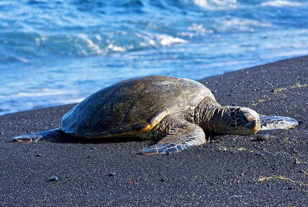 University of Puerto Rico to establish turtle nesting area