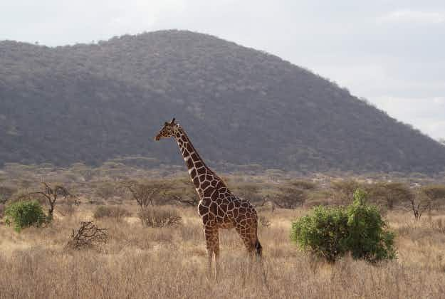 Kenya drops park fees and announces free visas for under 16s