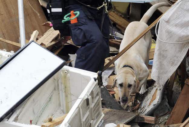 Japanese scientists develop rescue 'robodog'