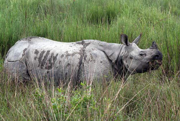 Nepal to gift rare rhinos to China under investment deal