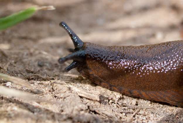 Mystery 'alien' slug dug up from Kazakh coal pile