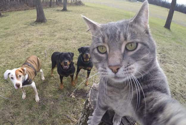 Selfie-taking cat Manny is boss of all dogs and king of Instagram