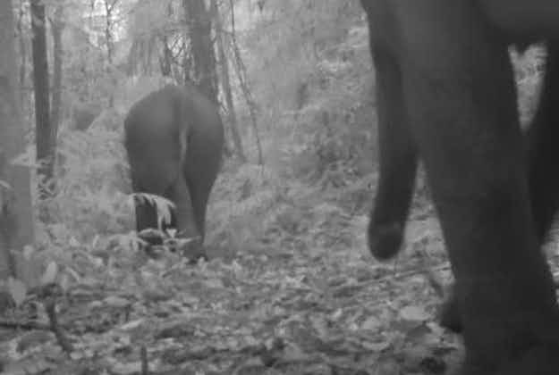 Conservationists' pride as elephants thrive in Cambodian mountains
