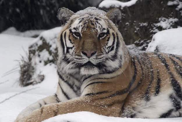 Oregon Zoo animals make the most of snowy weather