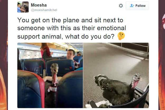 Turkey apparently spotted on commercial flight