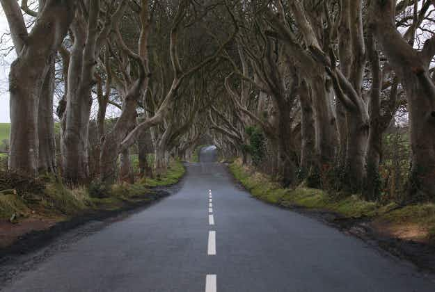 Game of Thrones' Dark Hedges in white line drama