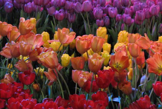 Philadelphia Flower Show in full bloom for NP centennial
