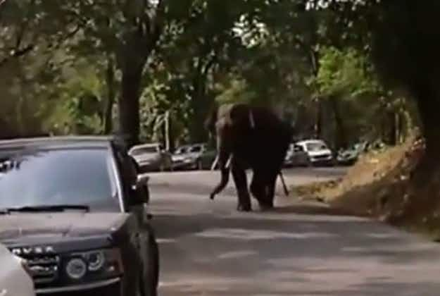 Lovesick elephant goes on the rampage in southern China