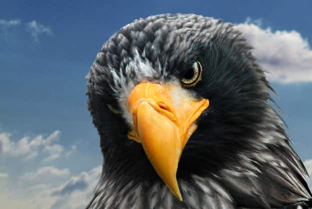 Hunt on for giant eagle on the loose in Kent