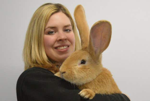 Dog-sized giant rabbit looking for new home in Scotland