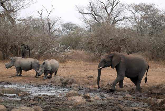 Nature decrees winners and losers in Kruger drought